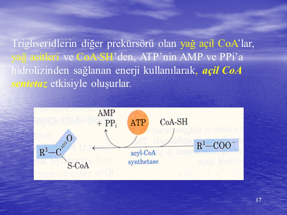 Trigliseridlerin diğer prekürsörü olan yağ açil CoA'lar, yağ asitleri ve CoASH'den, ATP'nin AMP ve PPi'a hidrolizinden sağlanan enerji kullanılarak, açil CoA sentetaz etkisiyle oluşurlar.