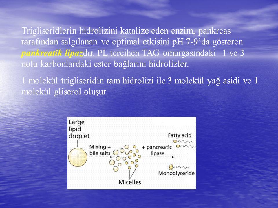 Trigliseridlerin hidrolizini katalize eden enzim, pankreas tarafından salgılanan ve optimal etkisini pH 7-9'da gösteren pankreatik lipazdır. PL tercihen TAG omurgasındaki 1 ve 3 nolu karbonlardaki ester bağlarını hidrolizler.