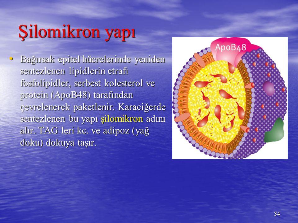 Şilomikron yapı