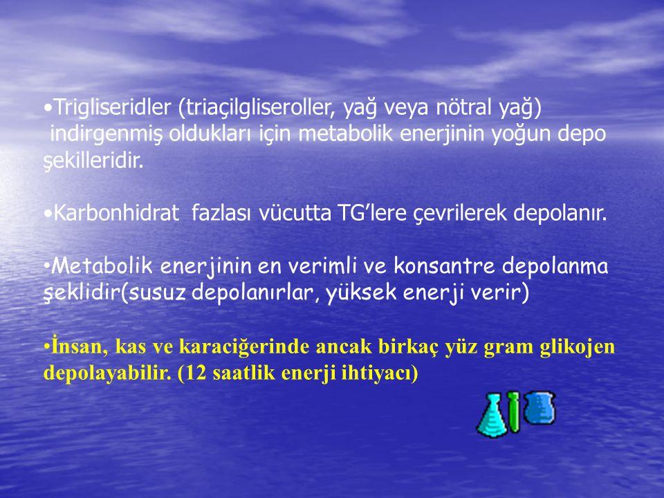 •Trigliseridler (triaçilgliseroller, yağ veya nötral yağ)