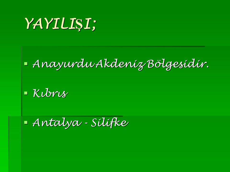 YAYILIŞI; Anayurdu Akdeniz Bölgesidir. Kıbrıs Antalya - Silifke