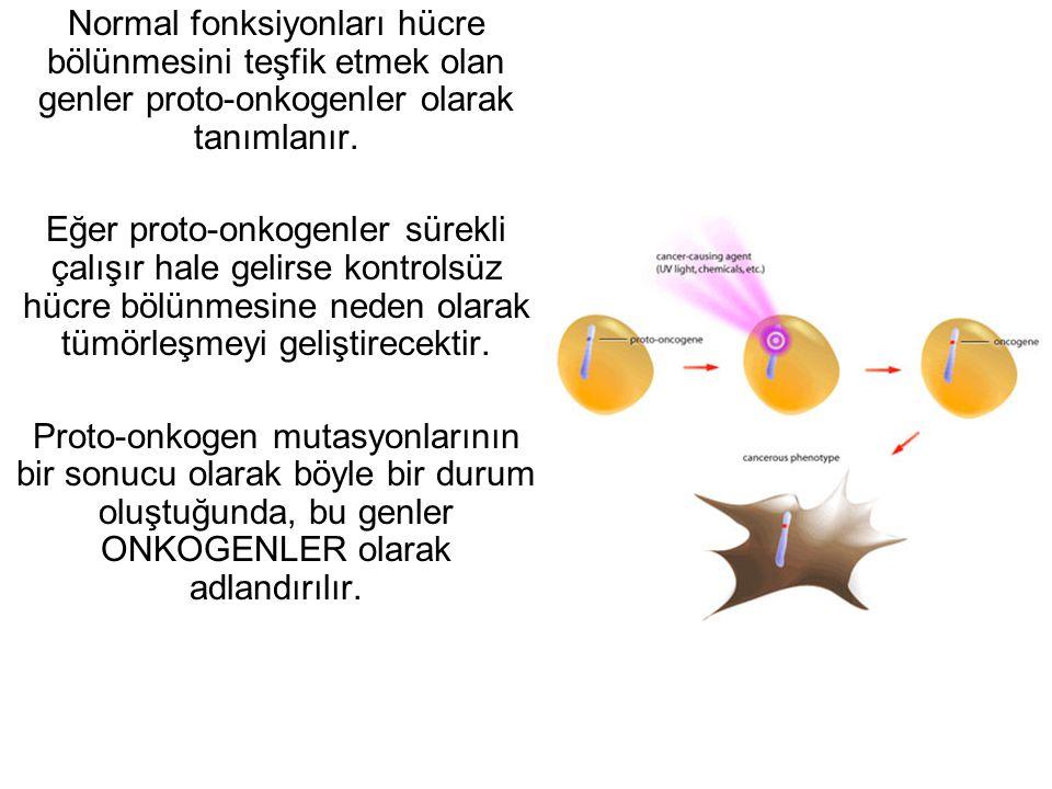 Normal fonksiyonları hücre bölünmesini teşfik etmek olan genler proto-onkogenler olarak tanımlanır.
