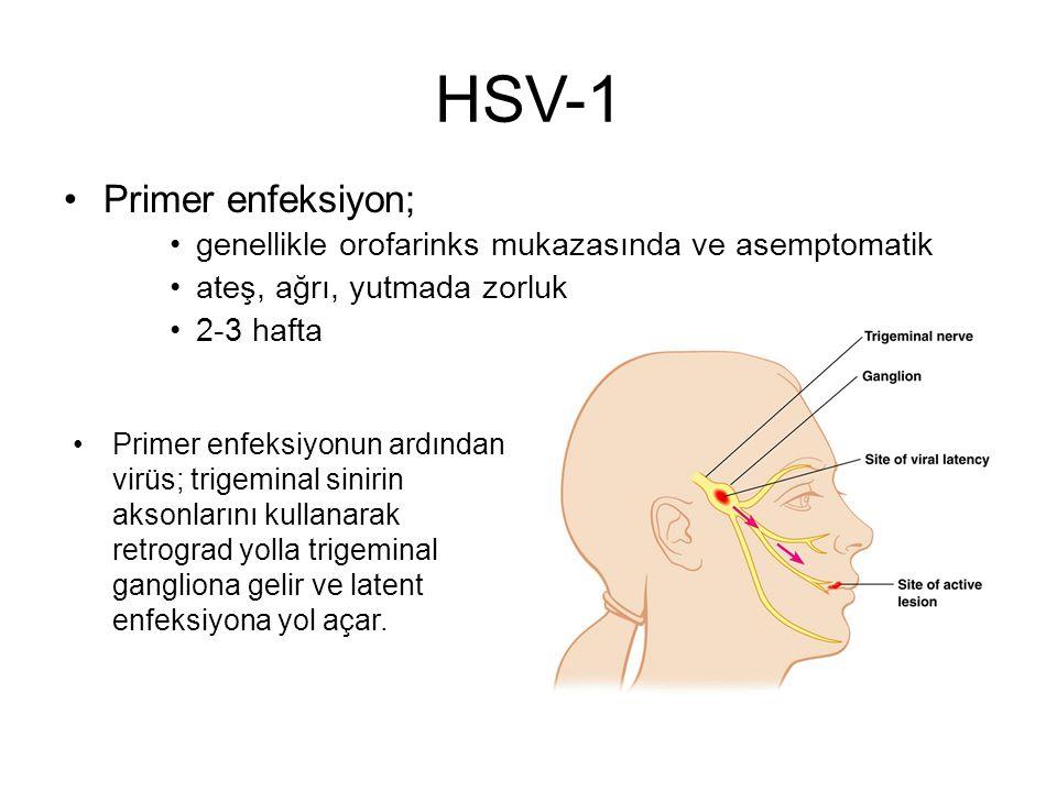 HSV-1 Primer enfeksiyon;
