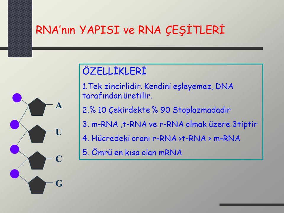 RNA'nın YAPISI ve RNA ÇEŞİTLERİ