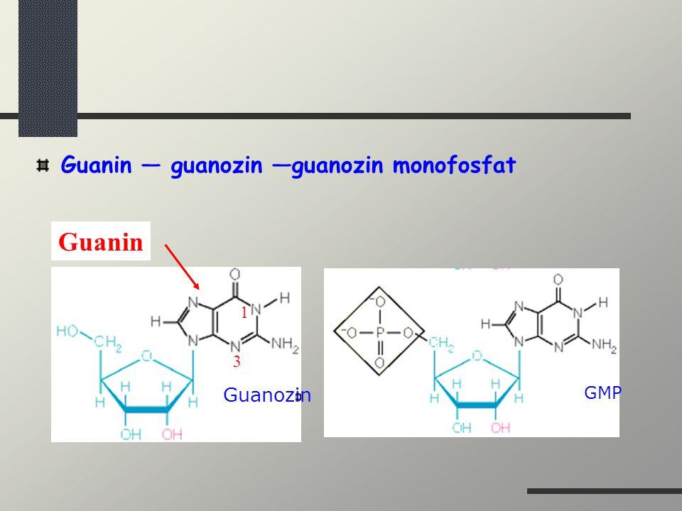 Guanin — guanozin —guanozin monofosfat