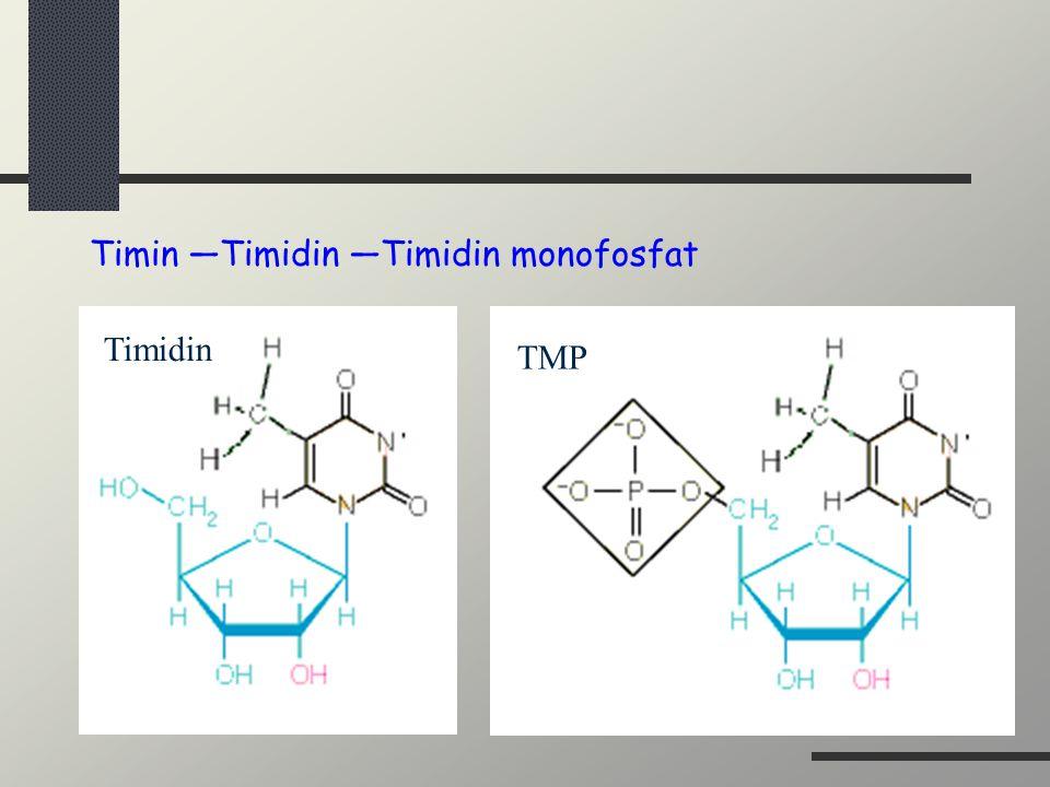 Timin —Timidin —Timidin monofosfat