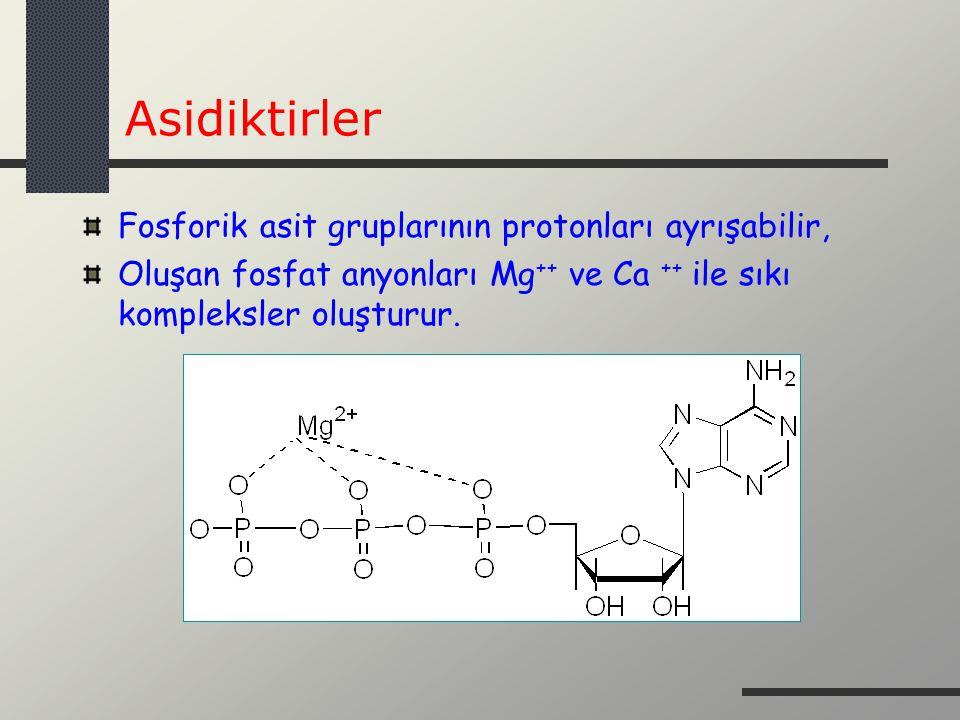 Asidiktirler Fosforik asit gruplarının protonları ayrışabilir,