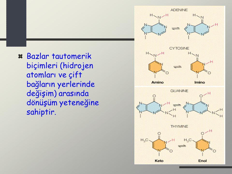 Bazlar tautomerik biçimleri (hidrojen atomları ve çift bağların yerlerinde değişim) arasında dönüşüm yeteneğine sahiptir.