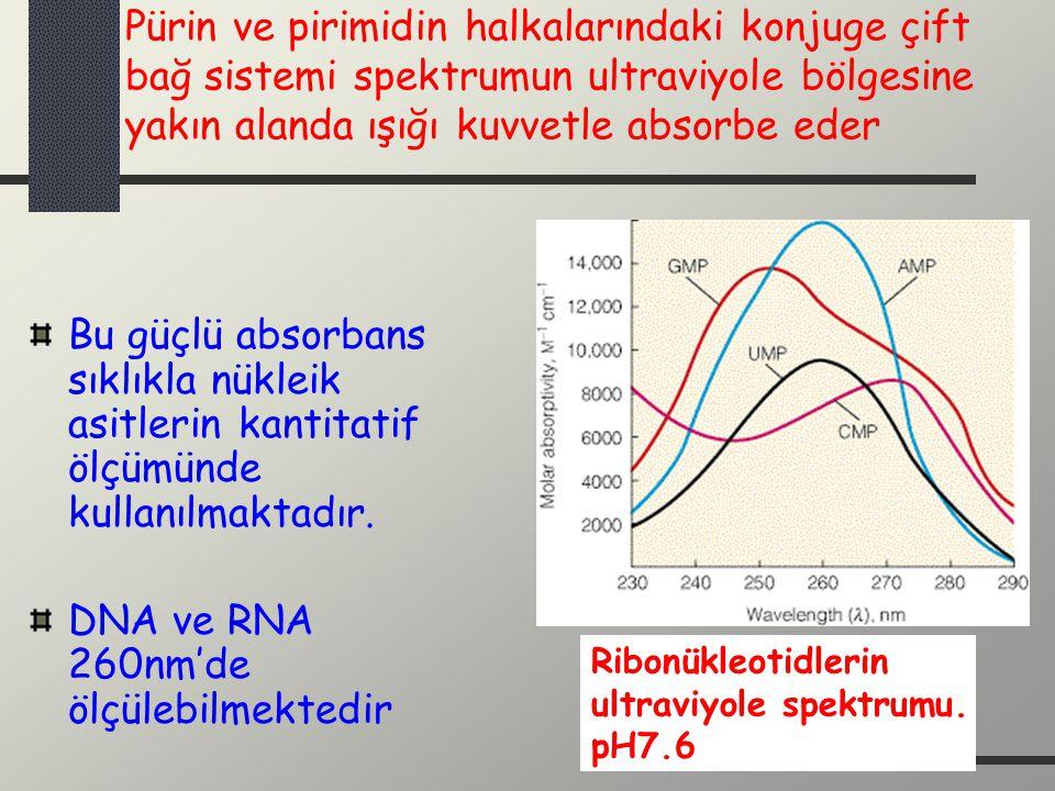 DNA ve RNA 260nm'de ölçülebilmektedir