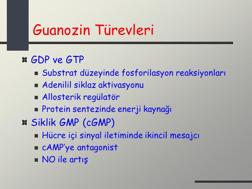 Guanozin Türevleri GDP ve GTP Siklik GMP (cGMP)