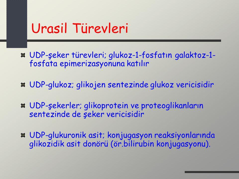 Urasil Türevleri UDP-şeker türevleri; glukoz-1-fosfatın galaktoz-1-fosfata epimerizasyonuna katılır.