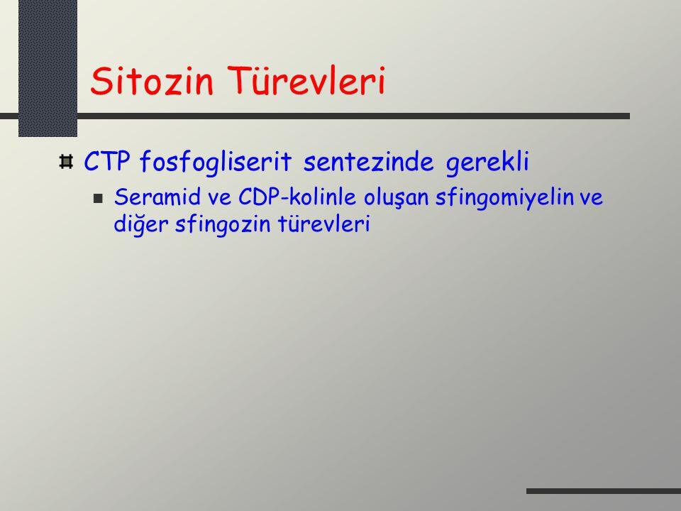 Sitozin Türevleri CTP fosfogliserit sentezinde gerekli