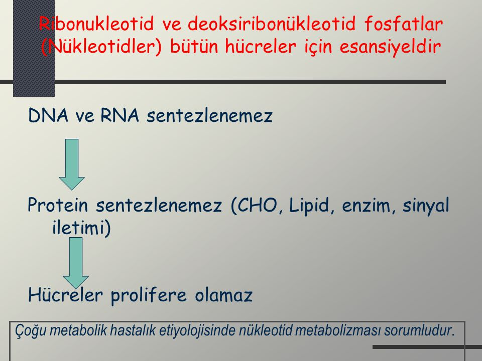 DNA ve RNA sentezlenemez