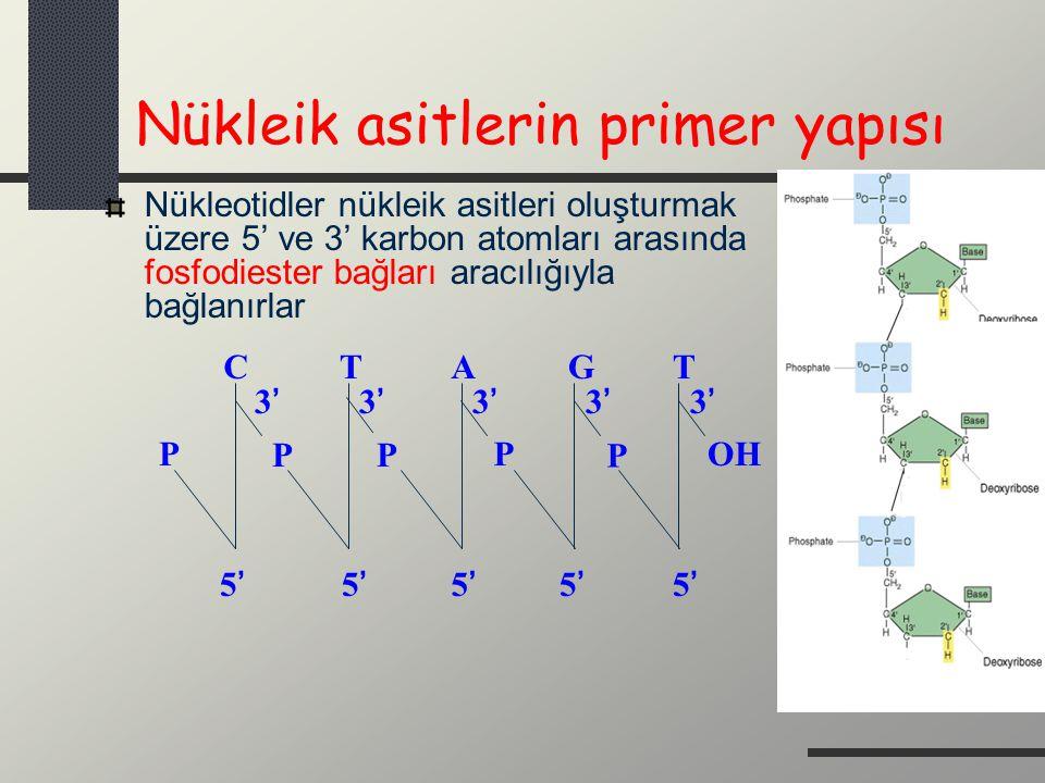 Nükleik asitlerin primer yapısı