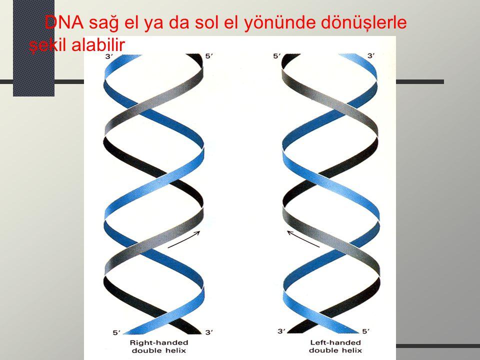 DNA sağ el ya da sol el yönünde dönüşlerle şekil alabilir