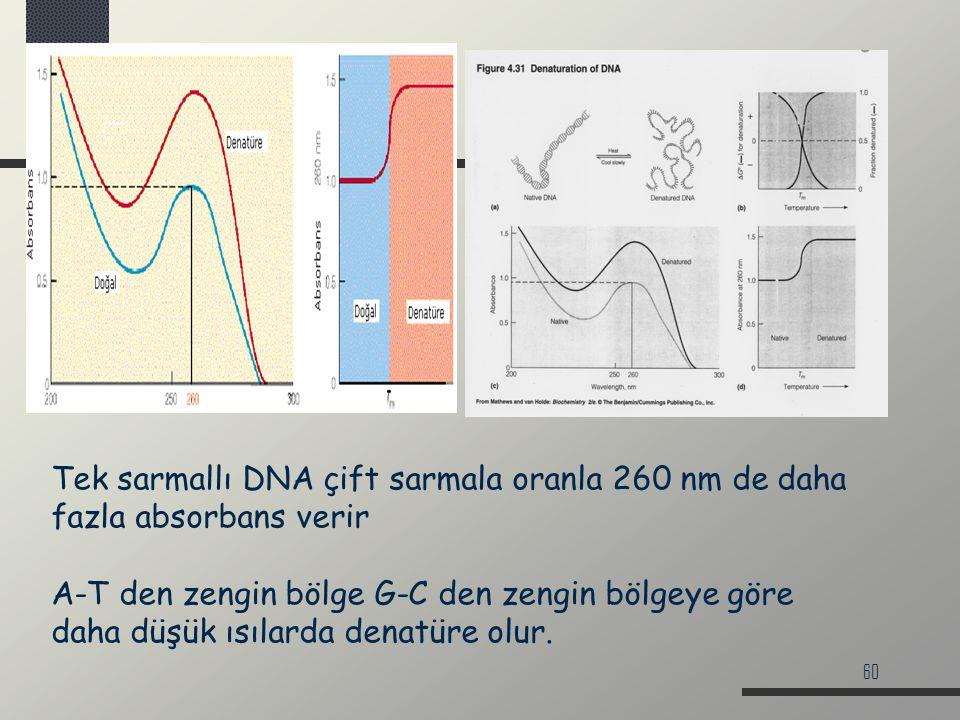 Tek sarmallı DNA çift sarmala oranla 260 nm de daha