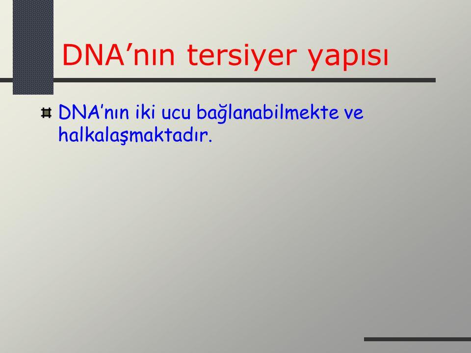DNA'nın tersiyer yapısı