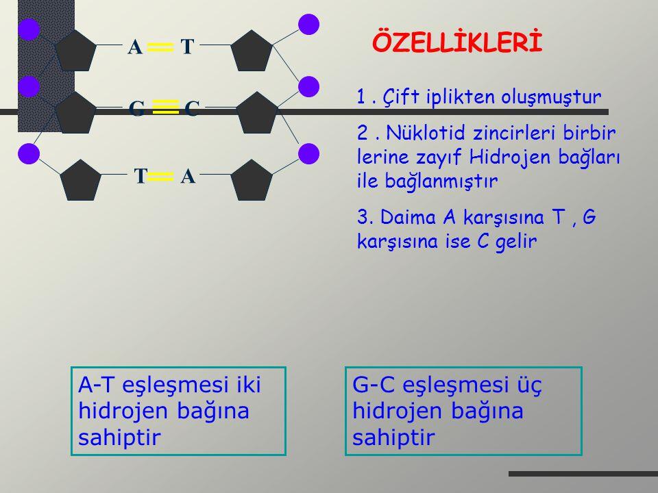 ÖZELLİKLERİ T G T A A-T eşleşmesi iki hidrojen bağına sahiptir