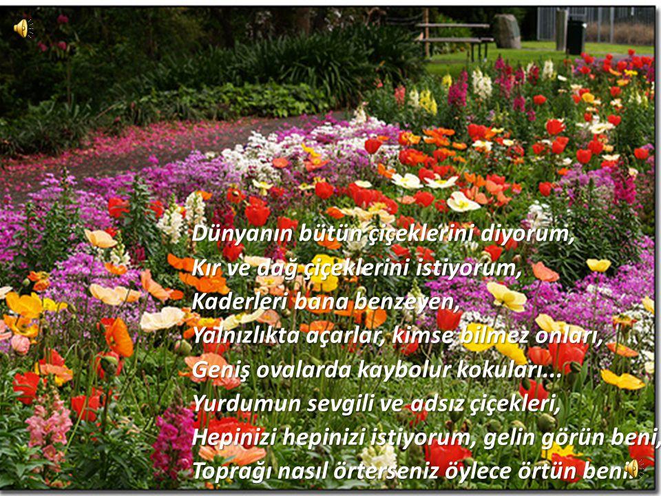 Dünyanın bütün çiçeklerini diyorum, Kır ve dağ çiçeklerini istiyorum, Kaderleri bana benzeyen, Yalnızlıkta açarlar, kimse bilmez onları, Geniş ovalarda kaybolur kokuları...
