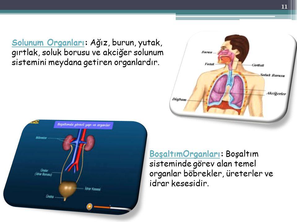 Solunum Organları: Ağız, burun, yutak, gırtlak, soluk borusu ve akciğer solunum sistemini meydana getiren organlardır.