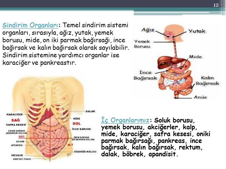 Sindirim Organları: Temel sindirim sistemi organları, sırasıyla, ağız, yutak, yemek borusu, mide, on iki parmak bağırsağı, ince bağırsak ve kalın bağırsak olarak sayılabilir. Sindirim sistemine yardımcı organlar ise karaciğer ve pankreastır.