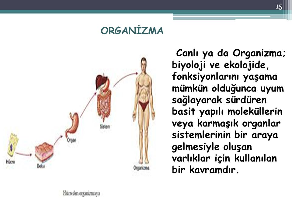 ORGANİZMA