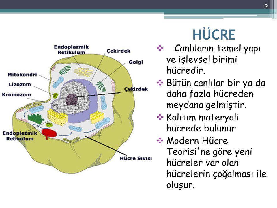 HÜCRE Canlıların temel yapı ve işlevsel birimi hücredir.