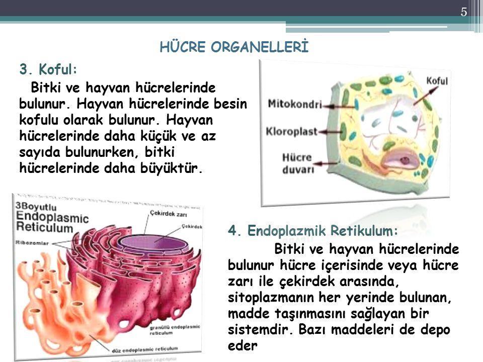 HÜCRE ORGANELLERİ
