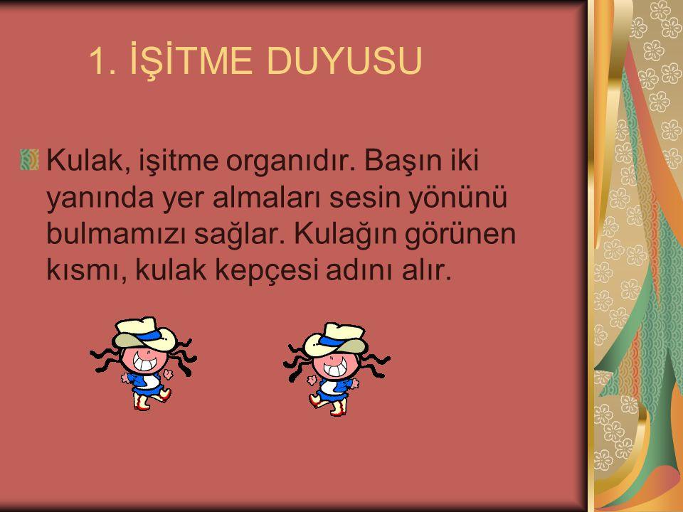 1. İŞİTME DUYUSU