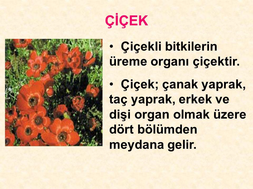 ÇİÇEK Çiçekli bitkilerin üreme organı çiçektir.