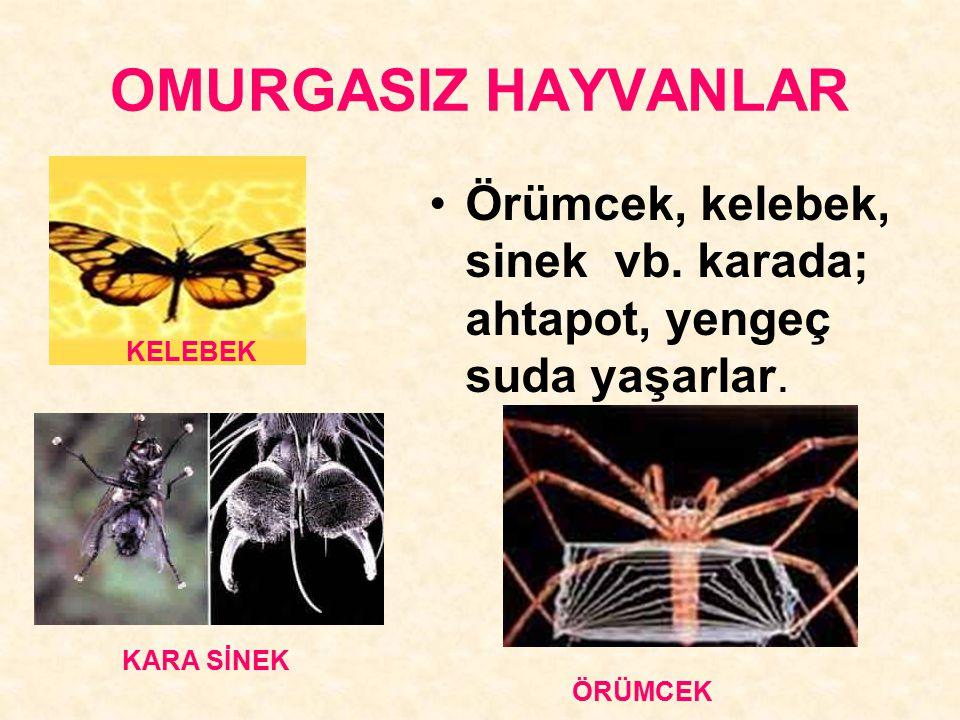 OMURGASIZ HAYVANLAR Örümcek, kelebek, sinek vb. karada; ahtapot, yengeç suda yaşarlar. KELEBEK.