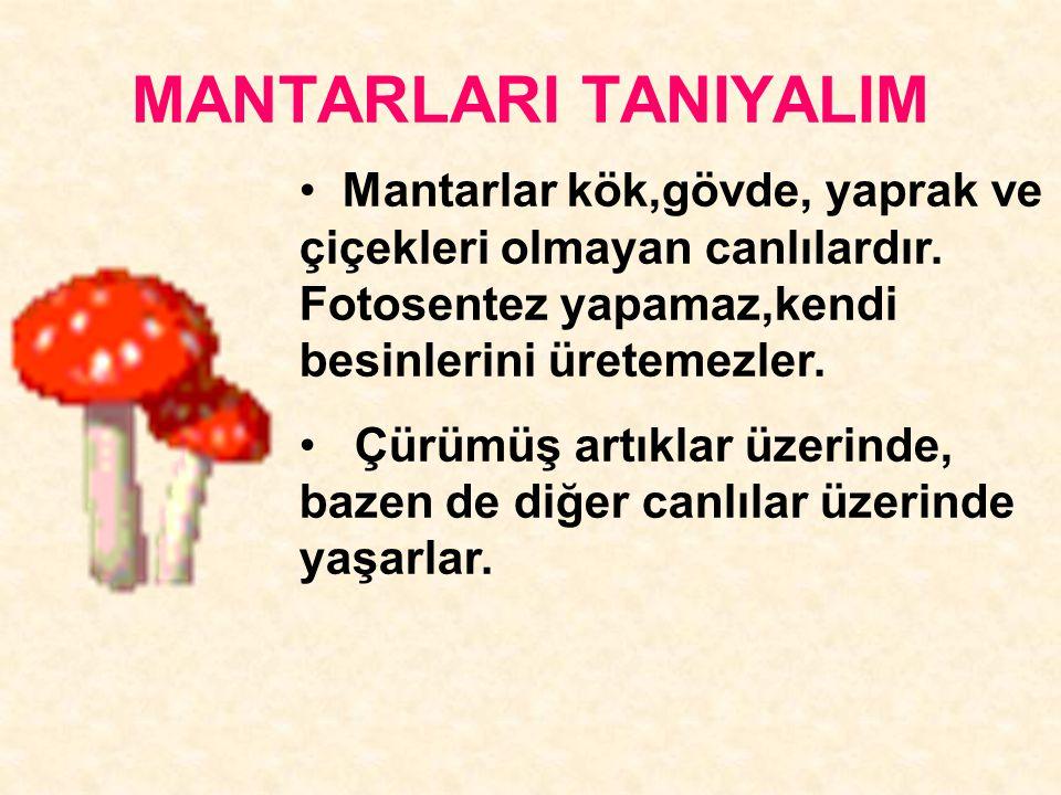 MANTARLARI TANIYALIM Mantarlar kök,gövde, yaprak ve çiçekleri olmayan canlılardır. Fotosentez yapamaz,kendi besinlerini üretemezler.