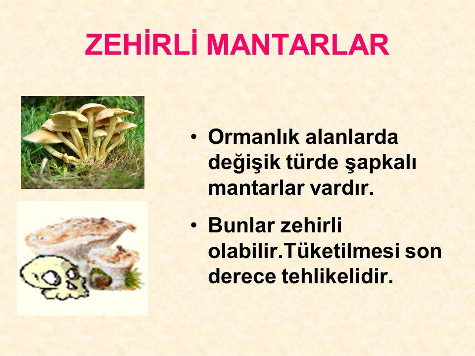 ZEHİRLİ MANTARLAR Ormanlık alanlarda değişik türde şapkalı mantarlar vardır.