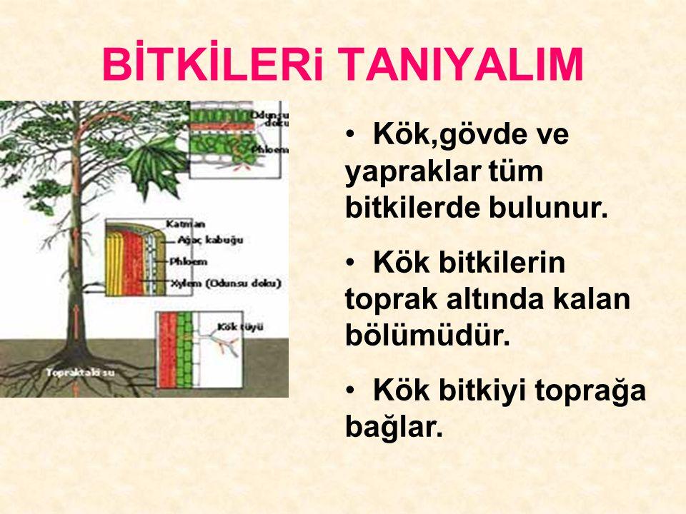 BİTKİLERi TANIYALIM Kök,gövde ve yapraklar tüm bitkilerde bulunur.