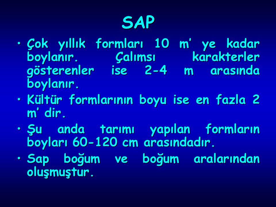 SAP Çok yıllık formları 10 m' ye kadar boylanır. Çalımsı karakterler gösterenler ise 2-4 m arasında boylanır.
