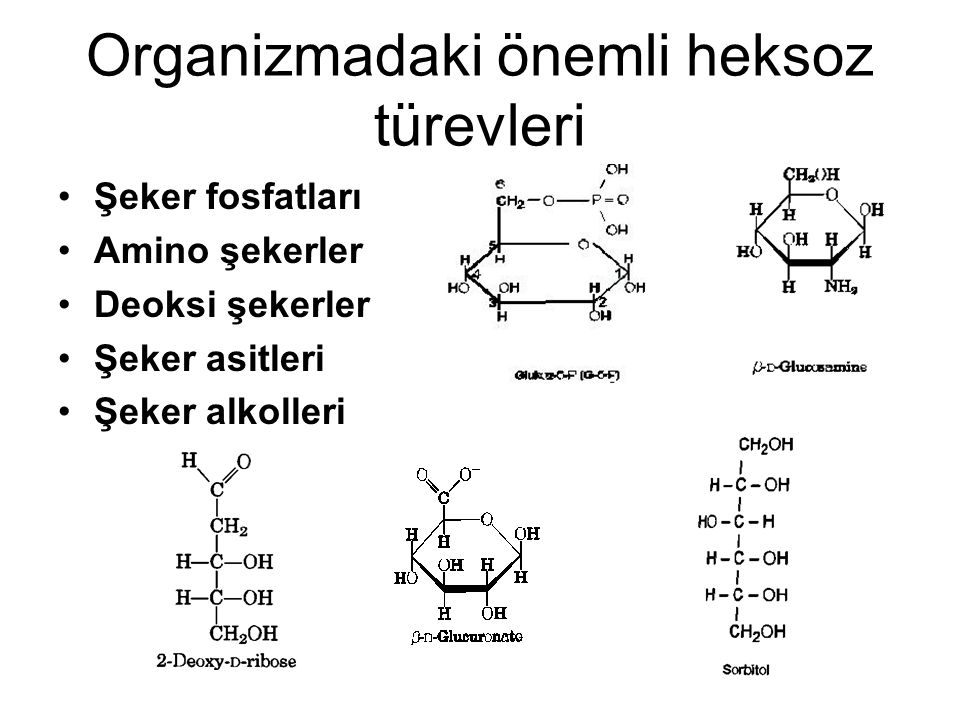 Organizmadaki önemli heksoz türevleri