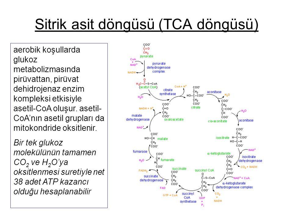 Sitrik asit döngüsü (TCA döngüsü)