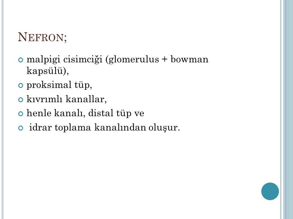 Nefron; malpigi cisimciği (glomerulus + bowman kapsülü),