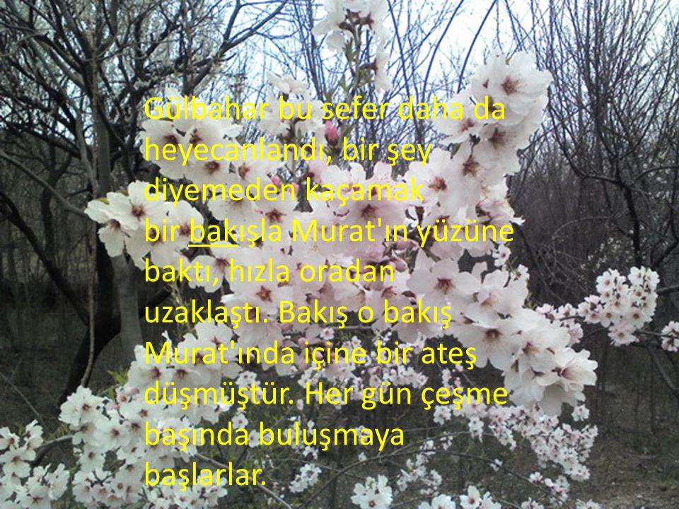 Gülbahar bu sefer daha da heyecanlandı, bir şey diyemeden kaçamak bir bakışla Murat ın yüzüne baktı, hızla oradan uzaklaştı.