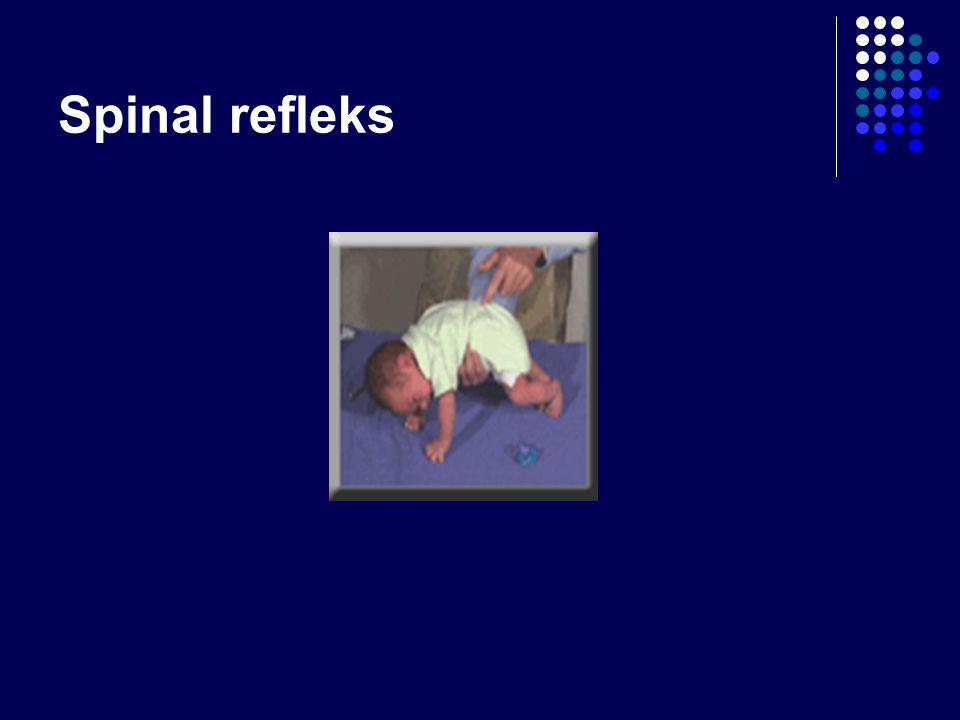 Spinal refleks