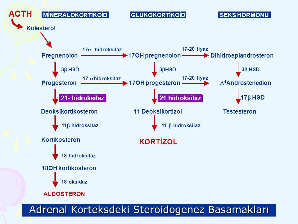 Adrenal Korteksdeki Steroidogenez Basamakları