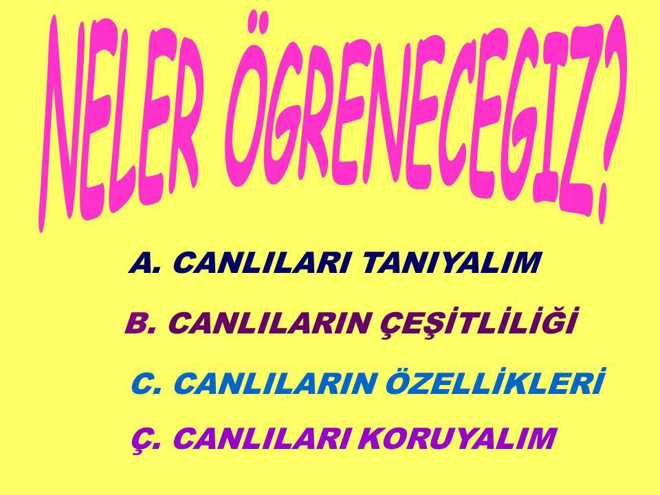 NELER ÖGRENECEGIZ A. CANLILARI TANIYALIM B. CANLILARIN ÇEŞİTLİLİĞİ