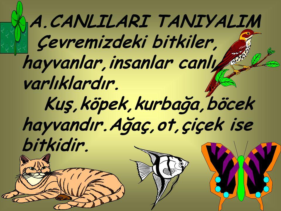A.CANLILARI TANIYALIM Çevremizdeki bitkiler, hayvanlar,insanlar canlı varlıklardır.