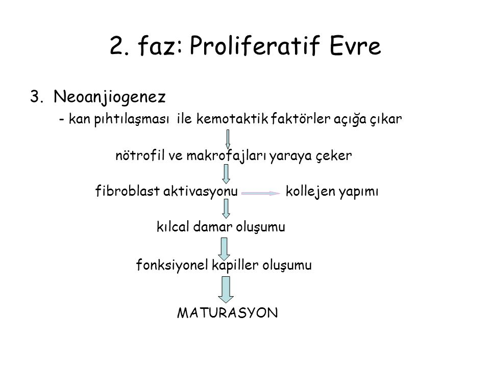 2. faz: Proliferatif Evre