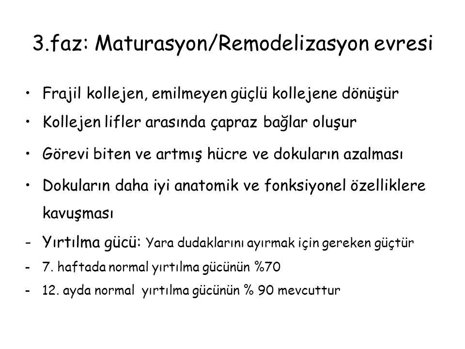 3.faz: Maturasyon/Remodelizasyon evresi