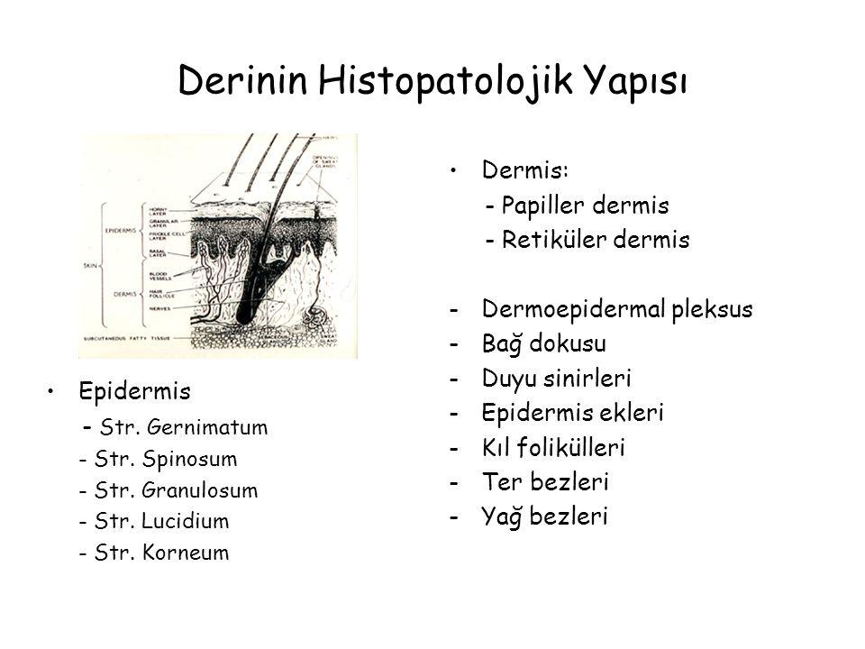 Derinin Histopatolojik Yapısı