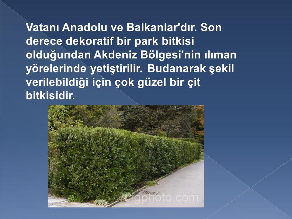 Vatanı Anadolu ve Balkanlar dır