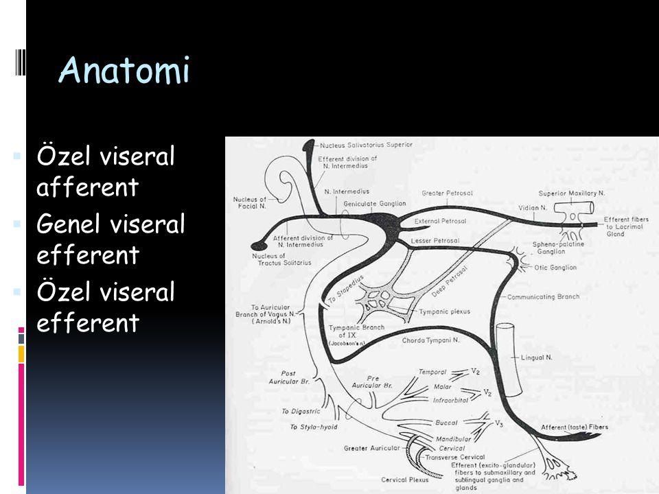 Anatomi Özel viseral afferent Genel viseral efferent