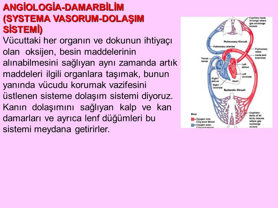 ANGİOLOGİA-DAMARBİLİM