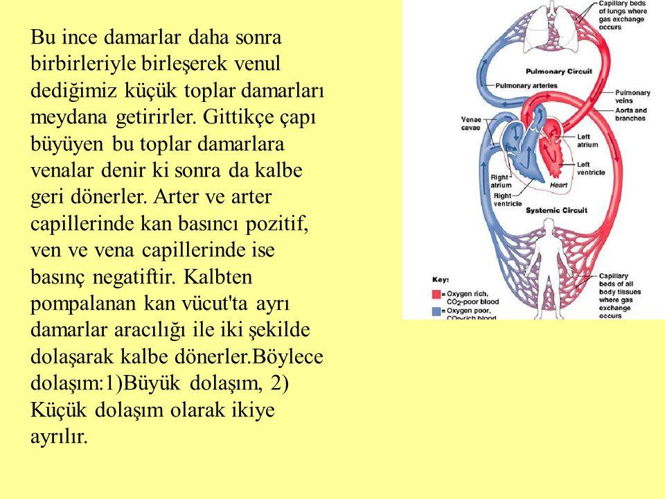 Bu ince damarlar daha sonra birbirleriyle birleşerek venul dediğimiz küçük toplar damarları meydana getirirler.